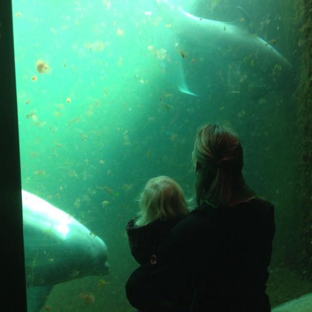 Dolfijnen aquarium met Anieljah