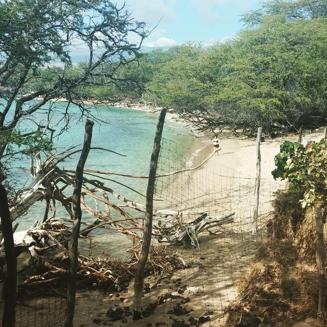 Elmer's (en dus ook Neil Young's) uitzicht op het strand