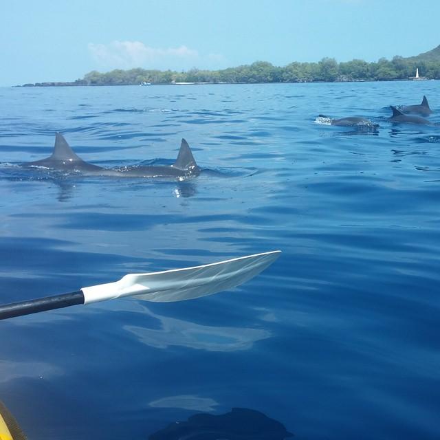 En daar zijn de dolfijnen!