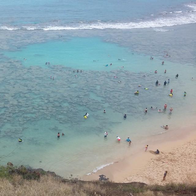 Met veel koraal. Wel jammer dat er zoveel mensen met hun lompe poten op het koraal gaan staan. Zeker omdat iedereen die het strand op wil verplicht een film van 9 minuten moet kijken over het behoud van de baai en wat je dus allemaal niet mag doen