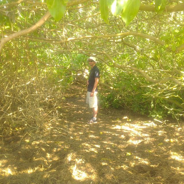 Op zoek naar het strand waar de serie 'Lost' is opgenomen