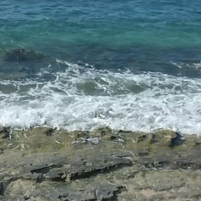 Zwemmende schildpadden!