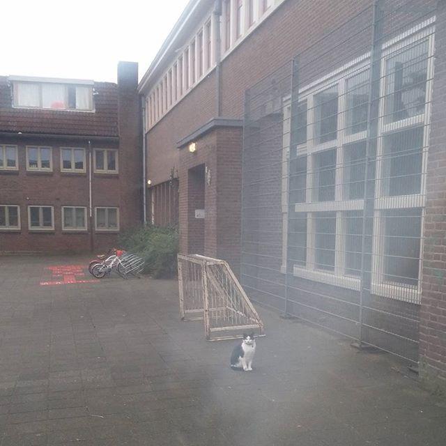 De schoolpoes helemaal alleen op het schoolplein. #herfstvakantie
