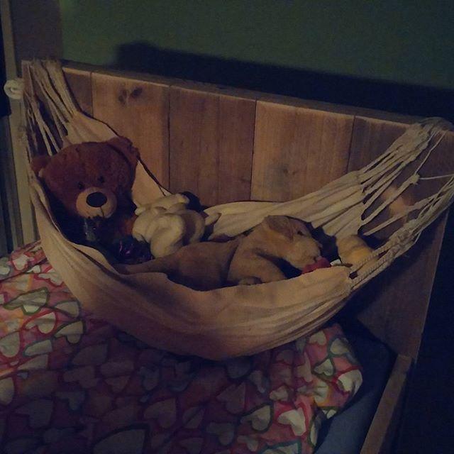De baby hangmat heeft weer een nieuwe functie.